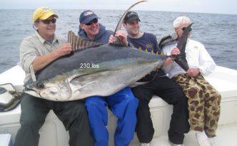 venice yellowfin tuna fishing